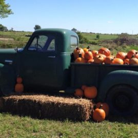 The Pumpkin Ranch